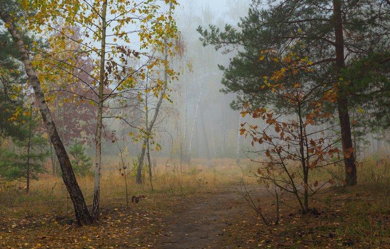 лес, осень, октябрь, утро, , туман Затуманены тропы лесныеphoto preview