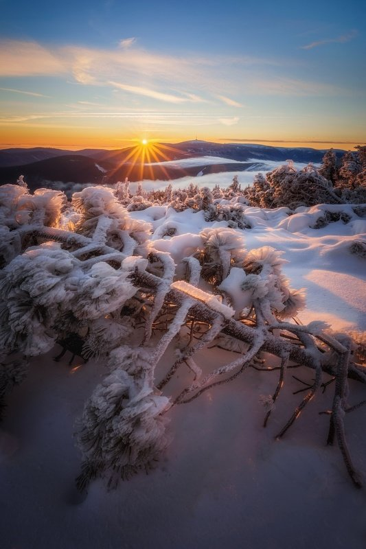 landscape, tree, sunrise, panorama, fog Frosty Morning in Jeseniky Mountainsphoto preview