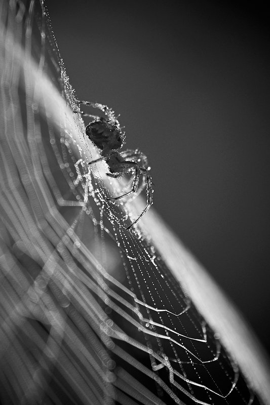 Morning web...photo preview