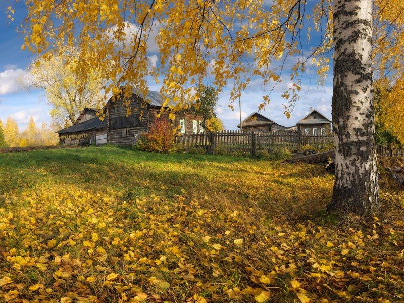 На ковре из желтых листьевphoto preview