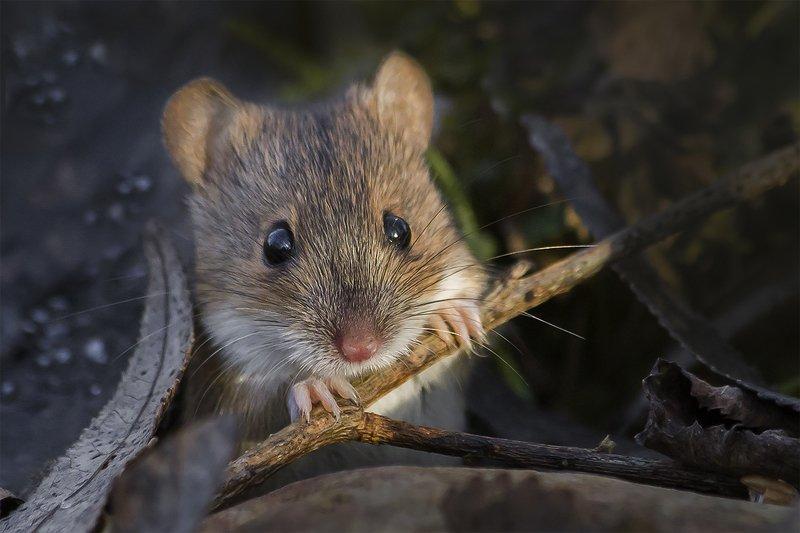 мышь, нора, весна Неужели весна!photo preview