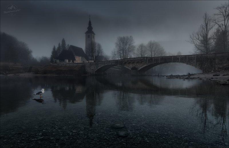 словения, бохинь, бохиньское озеро, slovenia, bohinj, Пейзаж с чайкой фото превью
