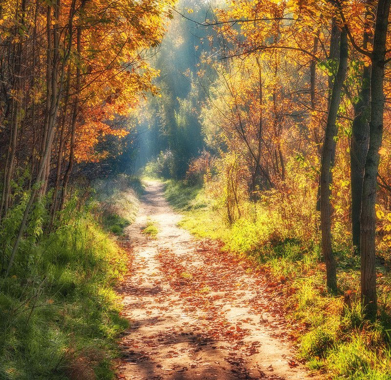 подмосковье, осень, дорожка ...photo preview
