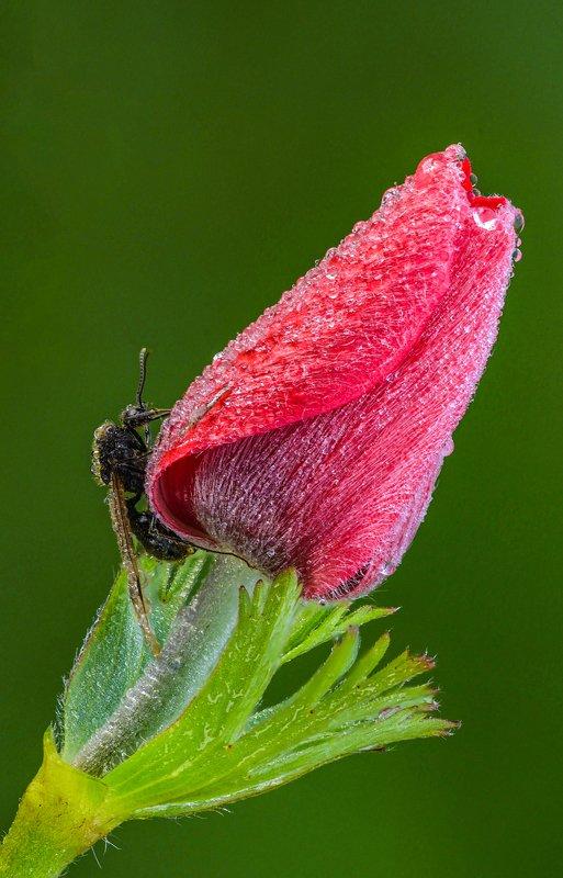 макро, цветы, роса,насекомое, Веснаphoto preview