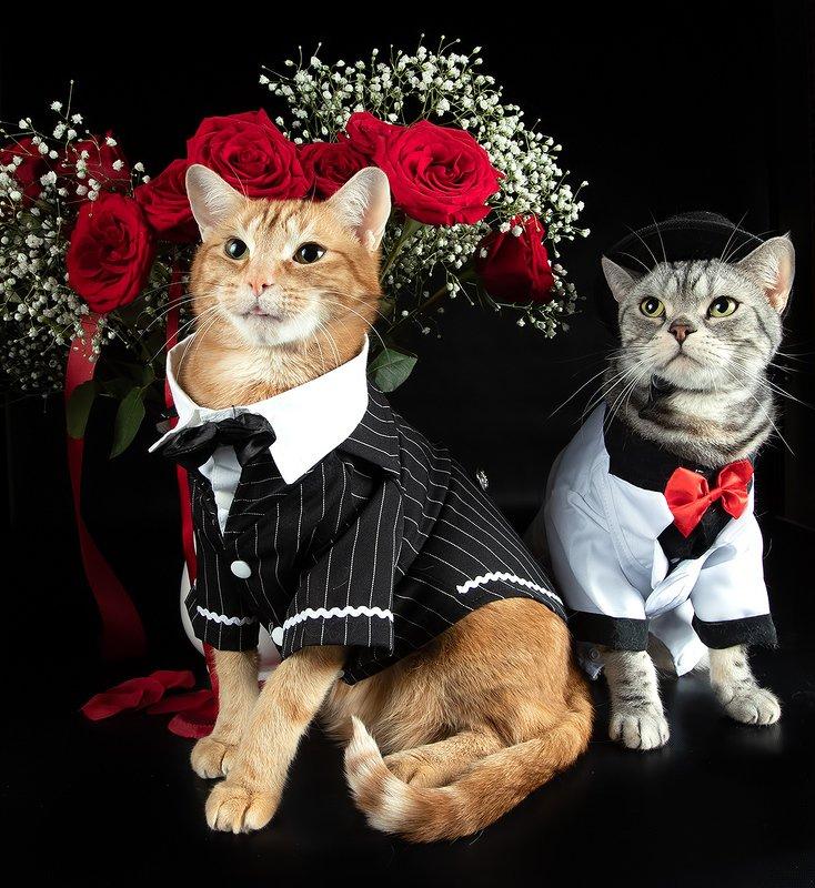 cat, cats, кот, кошка,домашние любицы,  американский короткошерстный кот, american shorthair cat, рыжик, ginger, ragdoll cat, black cat Поздравляем Всех Женщин С Праздником 8 Марта!photo preview