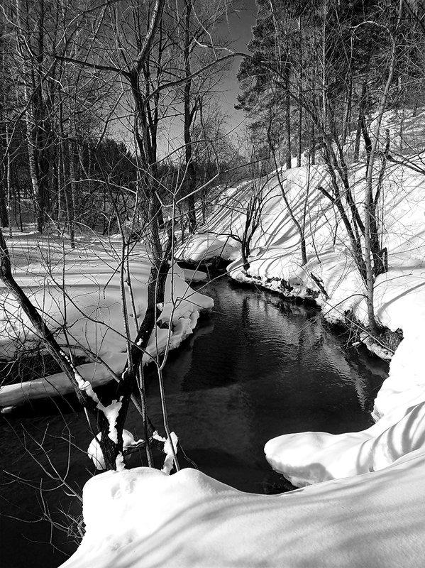 моя черно-белая веснаphoto preview