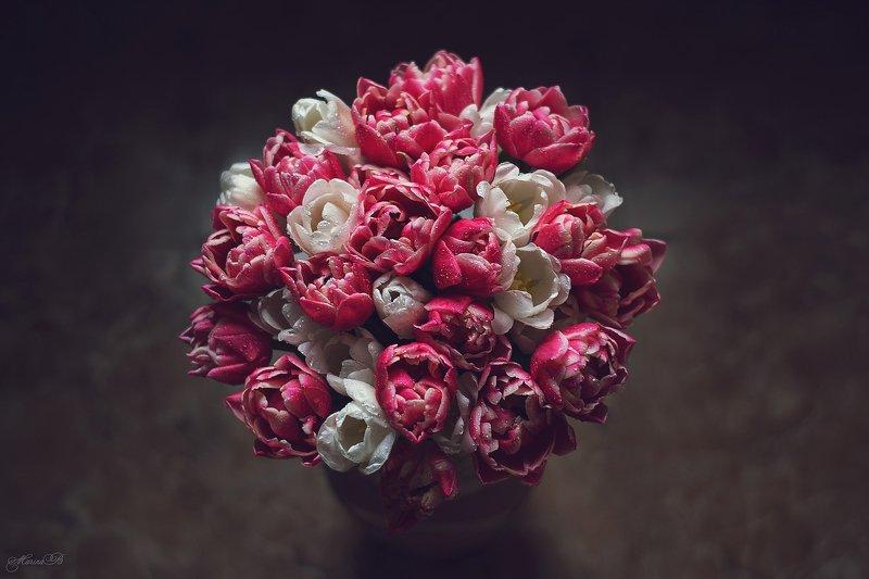 тюльпан, весна, капли С праздником 8 марта!photo preview
