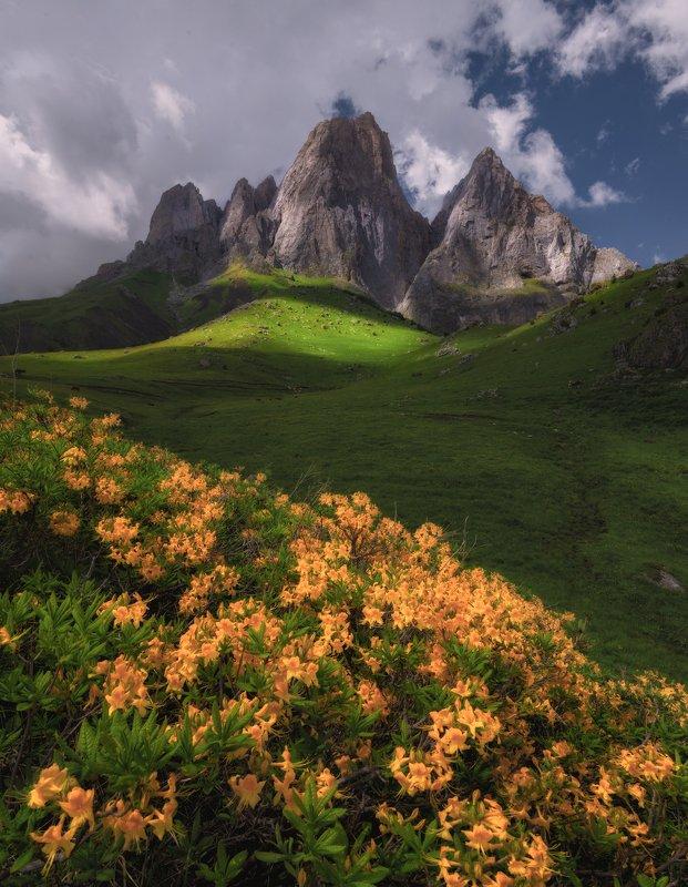 ингушетия, кавказ Цветы Ингушетии.photo preview
