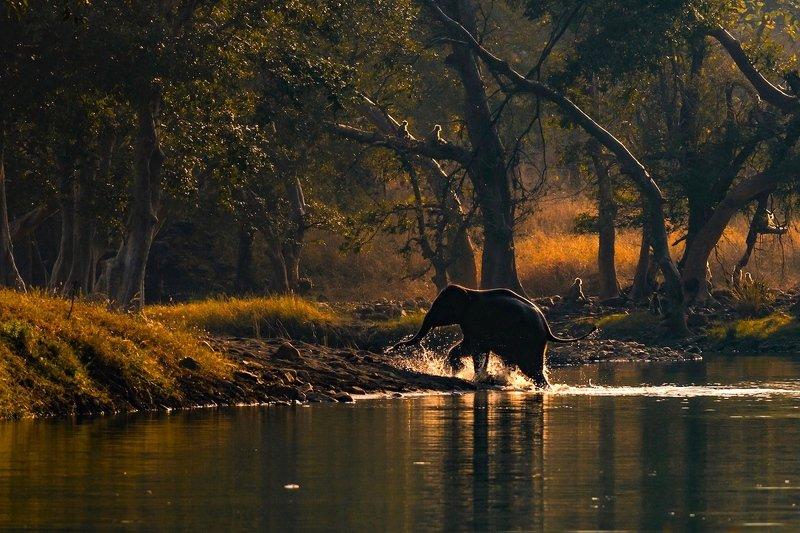 #wildlife, #nature, #elephant, #againstlight, #wilderness, #forest WILDERNESSphoto preview