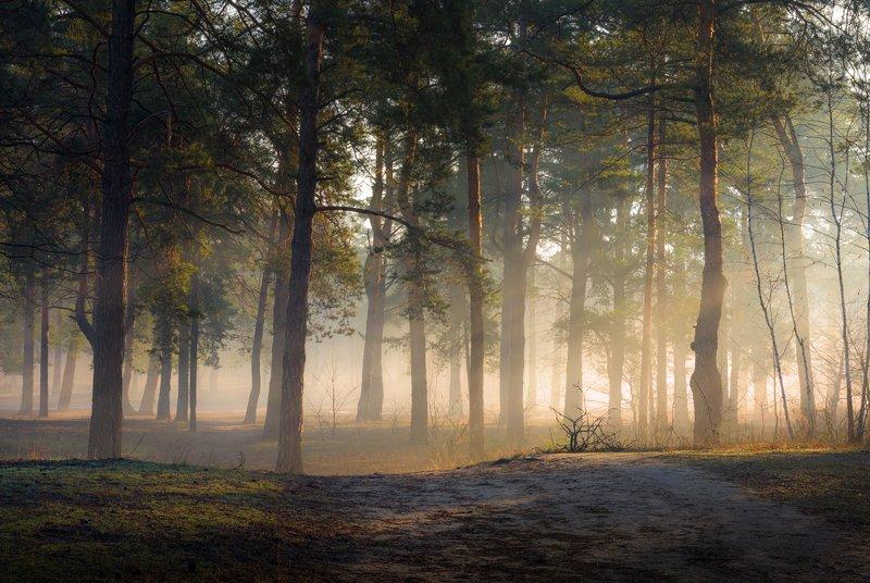 лес, весна, март, утро, рассвет, лучи, туман, испарина Дыхание весныphoto preview
