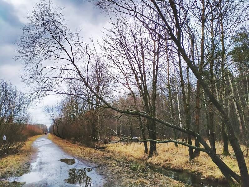 пейзаж, путешествие, весна, петербург, природа, мобильная, фотография Мобильная фотографияphoto preview