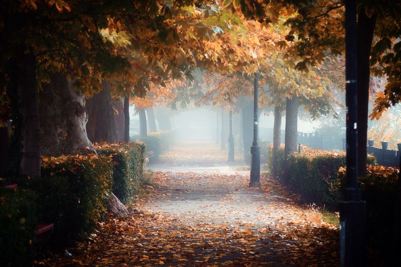 park, autumn, colors, photography, vac, hungary, walk, urban, citylife, city, fog, foggy, Autumn walk....photo preview