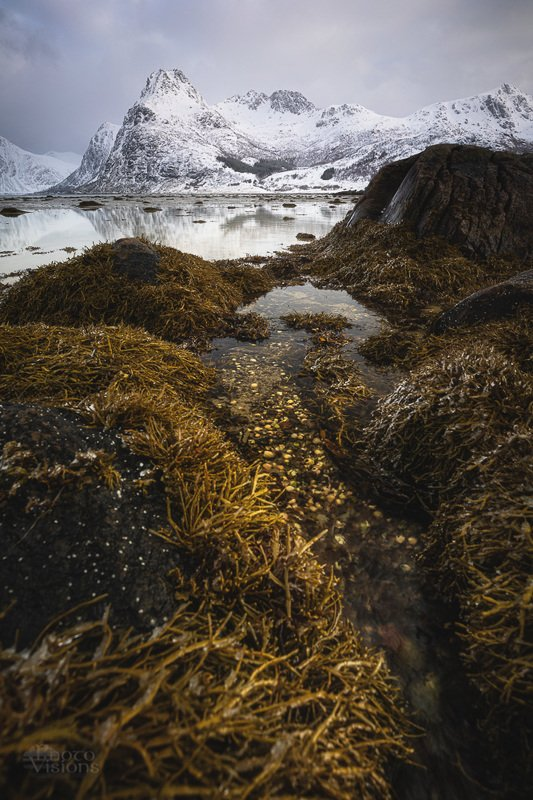 sea,lofoten,shore,shoreline,winter,norway,mountains Sea vegephoto preview
