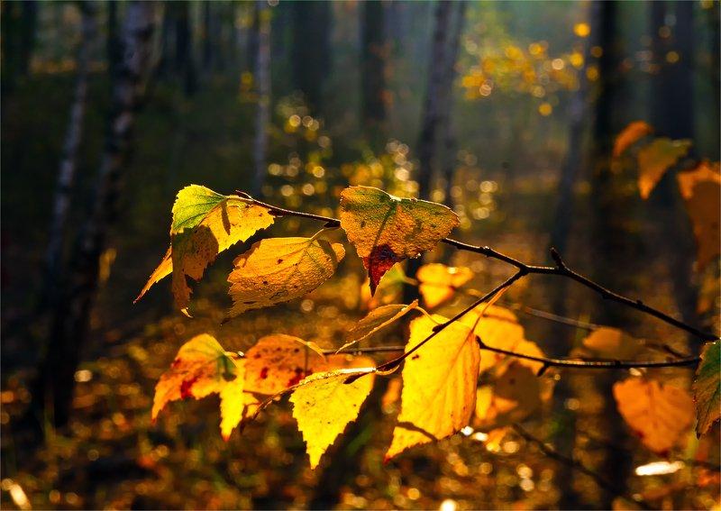 nature, природа, листья, солнце, осенние картинкиphoto preview