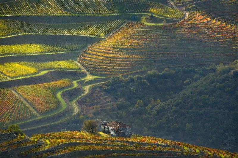 долина, река, дору, потругалия, виноград DOUROphoto preview