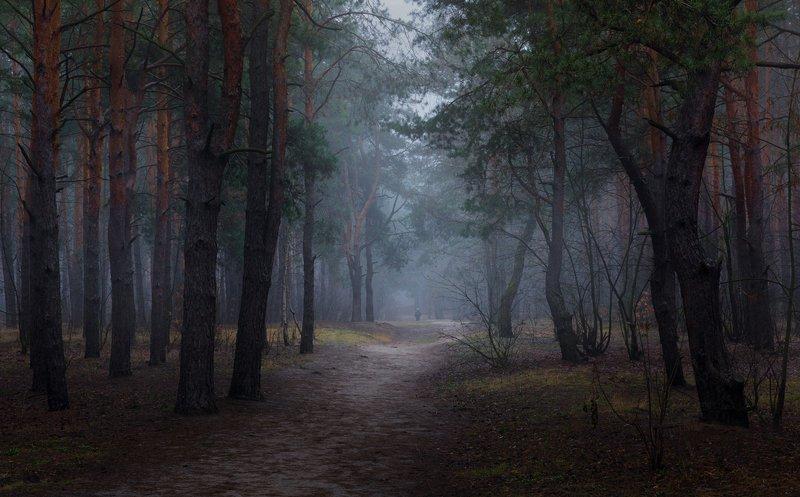 лес, весна, март, туман, мгла Густая весенняя мгла...Повеяло вдруг ноябрёмphoto preview