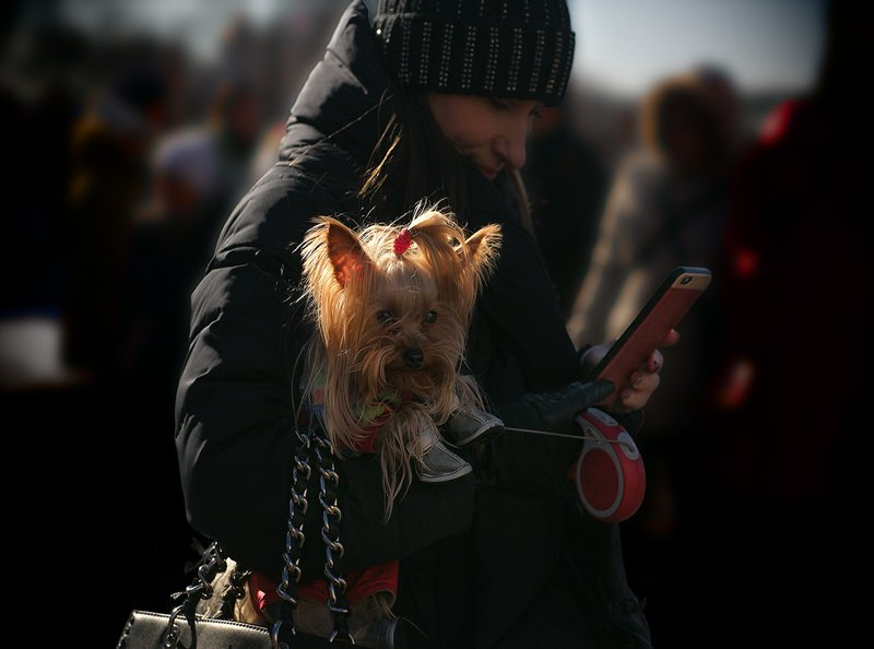 про собак и людей, чб фото, жанровое фото, уличное фото Про собак и людейphoto preview