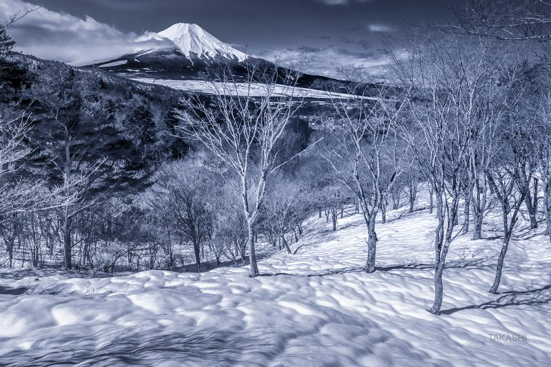 Fuji,mountain,Japan,snow,spring,morning,trees,wonderful,beautiful Snowy morningphoto preview