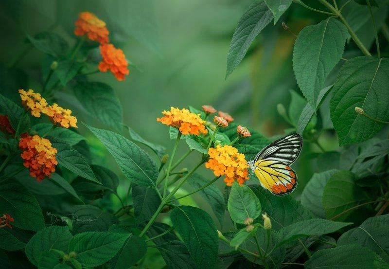 природа, животные, птицы, вьетнам, остров фукок Цветом летаphoto preview