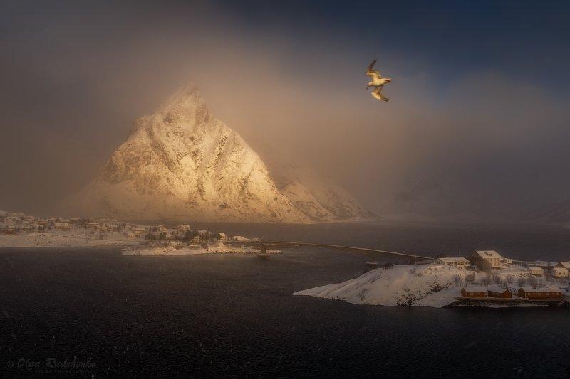 Солнце, снег и чайка в объективе!photo preview