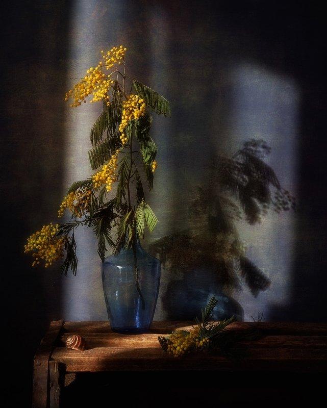 натюрморт,цветы,мимоза,весна,тень с мимозой... фото превью