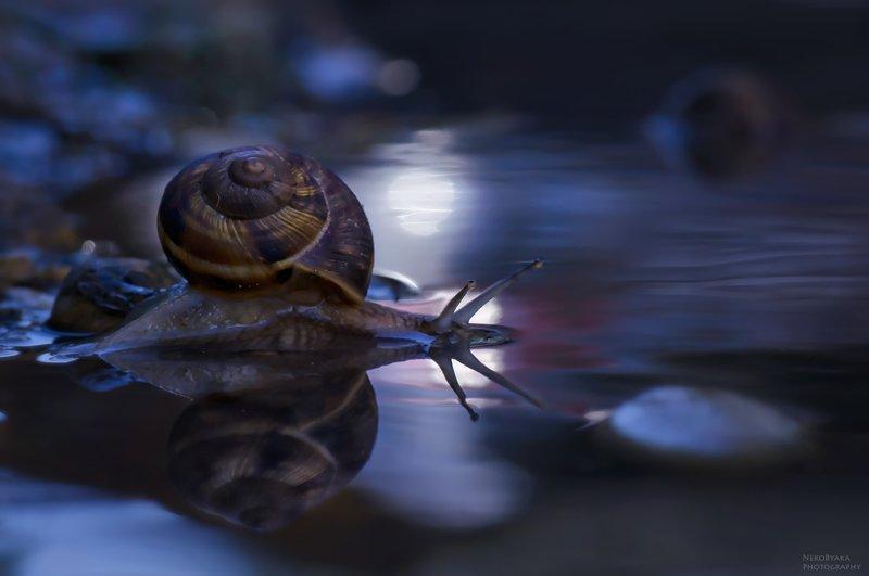 макро, природа, вода, улитка,  блики, macro, nature, water, snail, glare, Купания при лунеphoto preview
