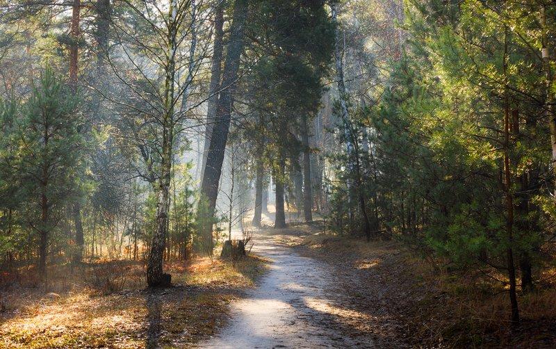 лес, весна, март, утро, рассвет, лучи, туман, испарина Растворяясь в солнечных лучахphoto preview