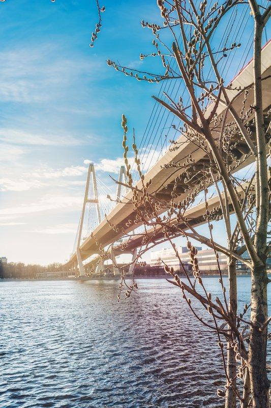 весна, верба, небо, река, спб, нева, мост Весна...photo preview