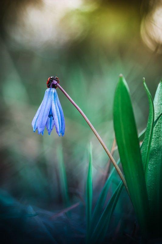 Пришла весна photo preview