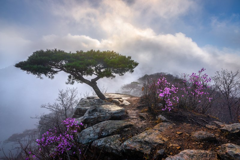mountains,peak,hiking,fog,clouds,blossom,light Awakening springphoto preview