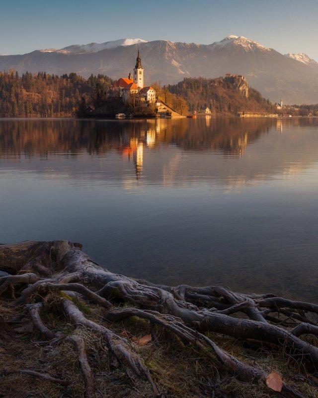 утро, вода, рассвет, отражения, церковь, Словения, Блед, озеро Корни озера Бледphoto preview