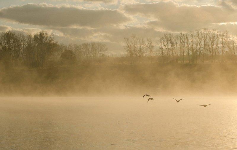 утро, природа, архангельское Сквозь туманphoto preview