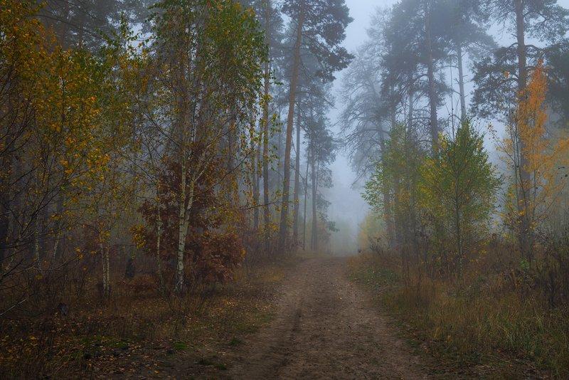 лес, осень, октябрь, туман, сырость В объятьях голубого туманаphoto preview