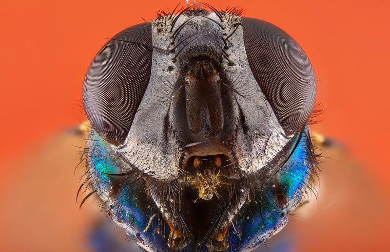 насекомое муха photo preview