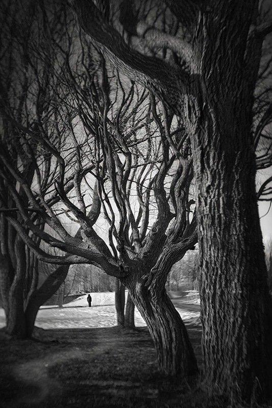 парк, волшебство, деревья Городской паркphoto preview