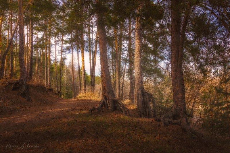 крым, фототуры, лес, пейзаж, природа Весной в лесуphoto preview