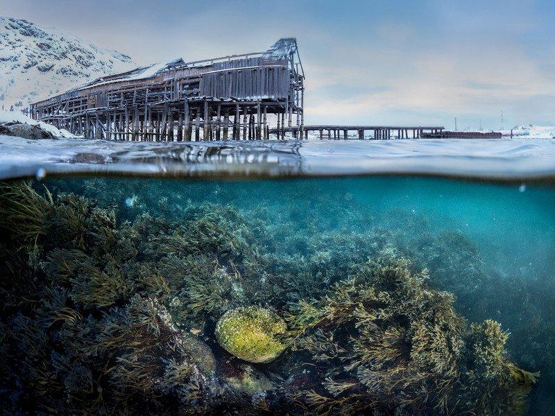 зима,север,териберка,подводный,сплит,под водой,природа,фототур,россия,пейзаж Сокровище фото превью