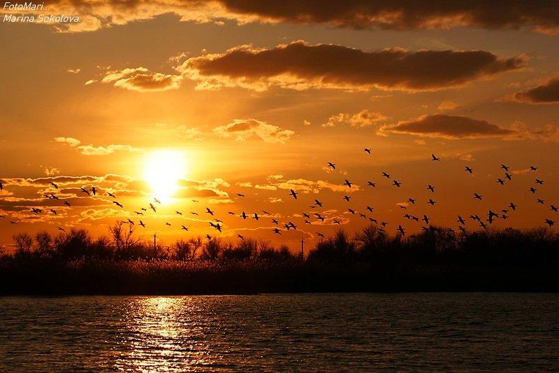 Летят перелётные птицы...photo preview