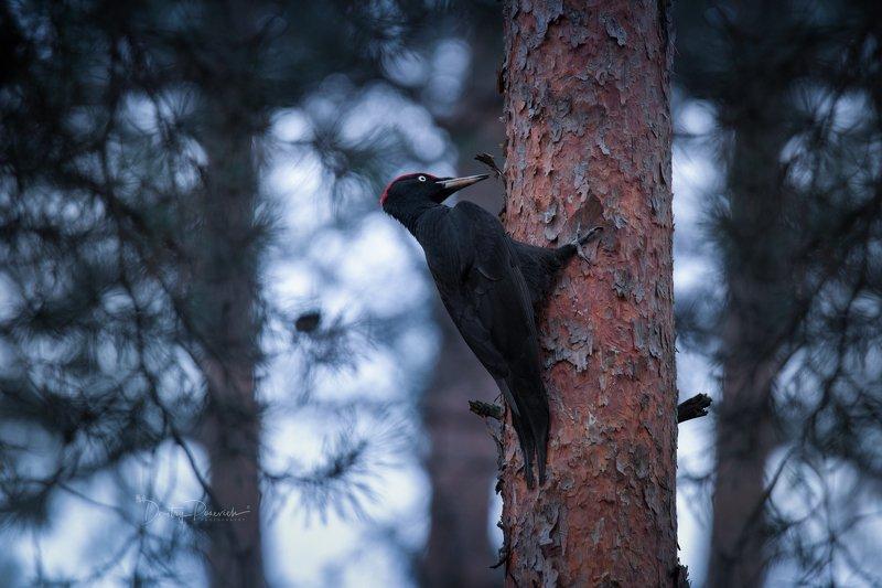 природа, лес, животные, птицы Весна идетphoto preview