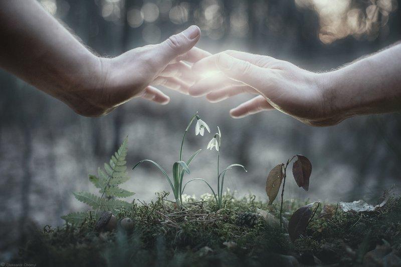 украина, коростышев, природа, лес, весна, руки, цветы, подснежники, любовь, забота, нежность, временность, сказка, легкость, чувства, житомирское полесье, тишина, уединение, счастье, жизнь, вдохновение, фотограф, чорный \