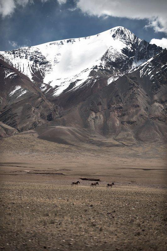 landscapes тибетский Алиphoto preview