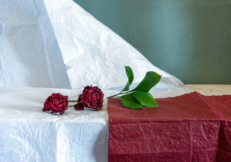 still life, натюрморт,    винтаж,    цветы,  роза, бутон, минимализм натюрморт с розамиphoto preview