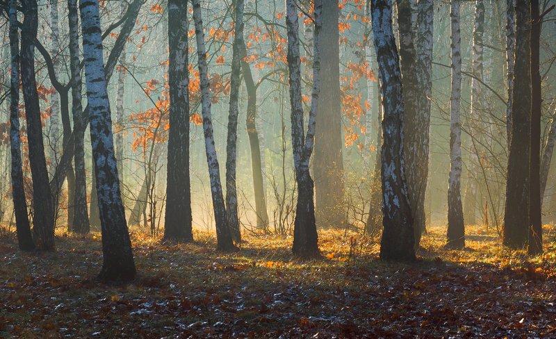 лес, весна, март, утро, рассвет, лучи, туман, испарина, берёзы Там, где мир затенён, ветер свеж и студён,  а на солнце теплеет щека.photo preview