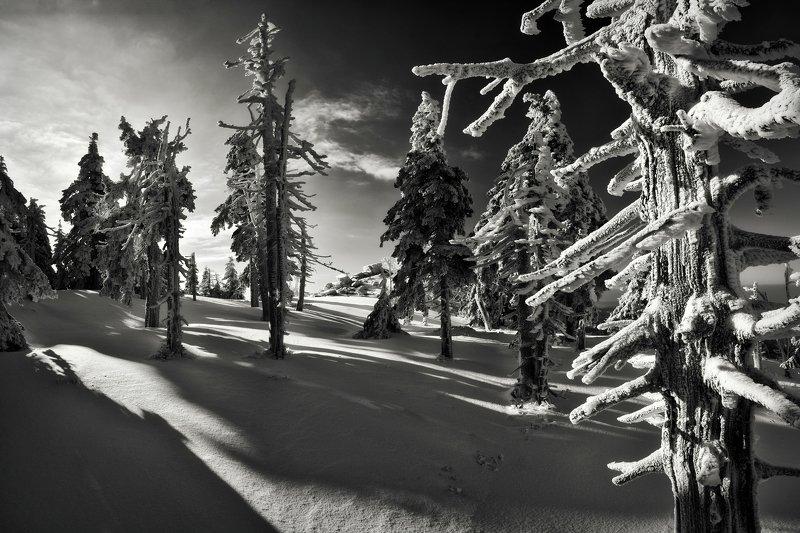 winter, snow, sunrise, czech republic, Morning shadowsphoto preview