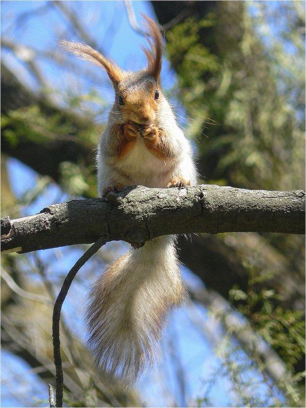 белка Белка песенки поет, да орешки всё грызетphoto preview
