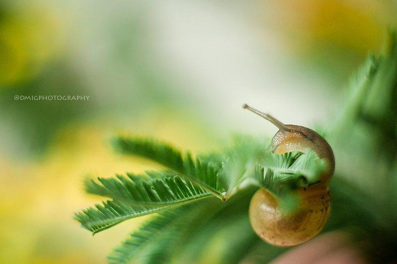 macro, helios44_2, улитка, природа, весна, зелень, magicmacro Гимнасткаphoto preview