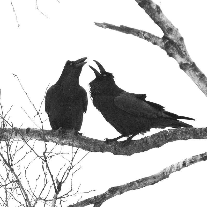 Весенние отношения.photo preview