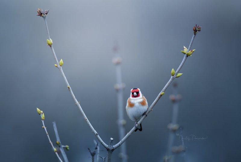 природа, лес, животные, птицы \