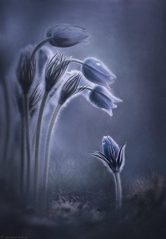 украина, коростышев, природа, лес, полесье, весна, сон трава, цветы, макро, макро мир, макро красота, волшебство, сказка, разговор, прощание, мечты, гармония, таинственные миры, чуткость, понимание, тишина, встреча, путь, дождик,таинственность, надежда, Ты куда?...туда где весна!photo preview