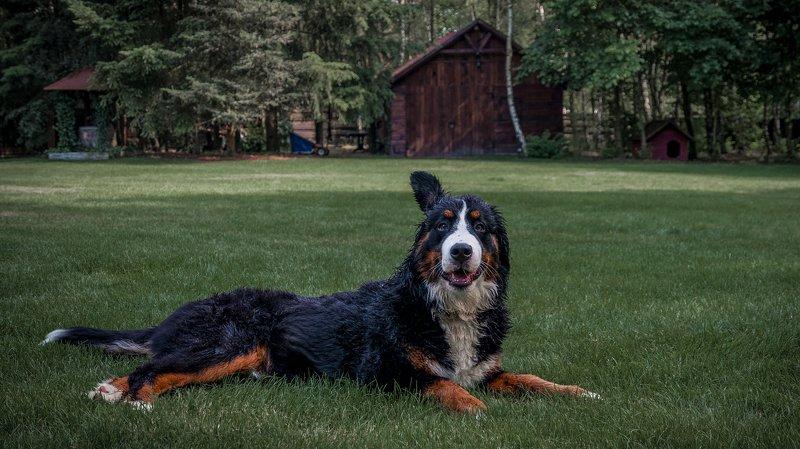 псы,собака,собачки,животные,собаки Кто там?photo preview